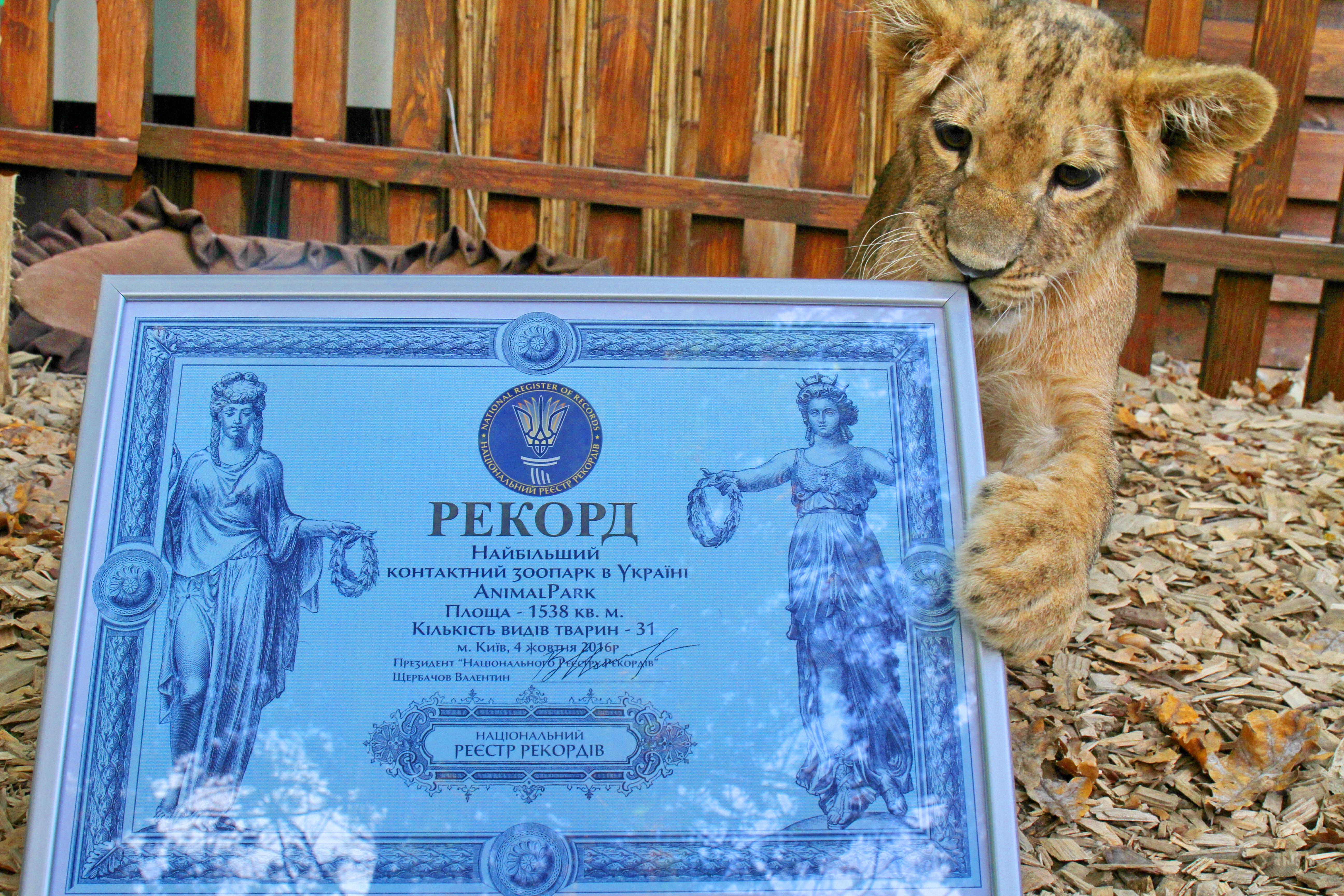 Султана Анимал Парк контактный зоопарк