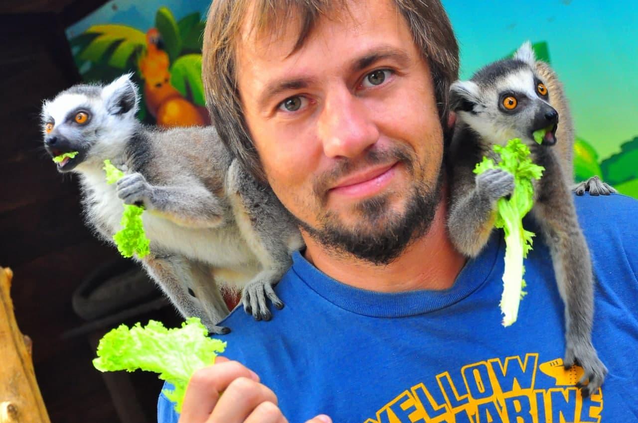 Лемур Катта — контактный зоопарк Animal Park
