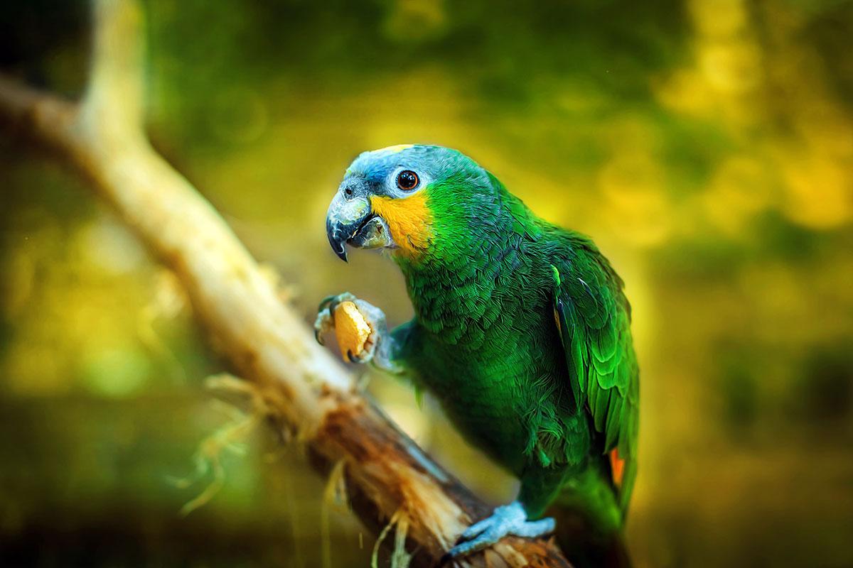 Попугай Амазон — контактный зоопарк Animal Park