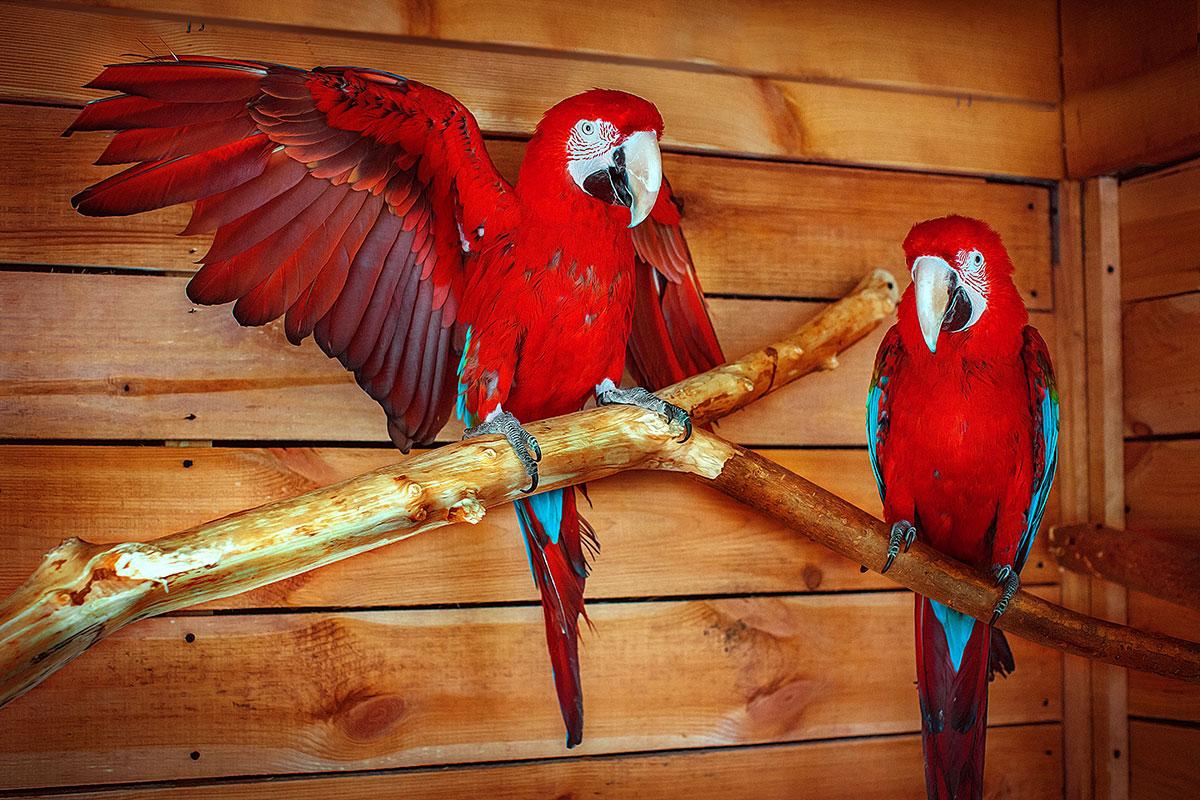 Попугай Ара — контактный зоопарк Animal Park