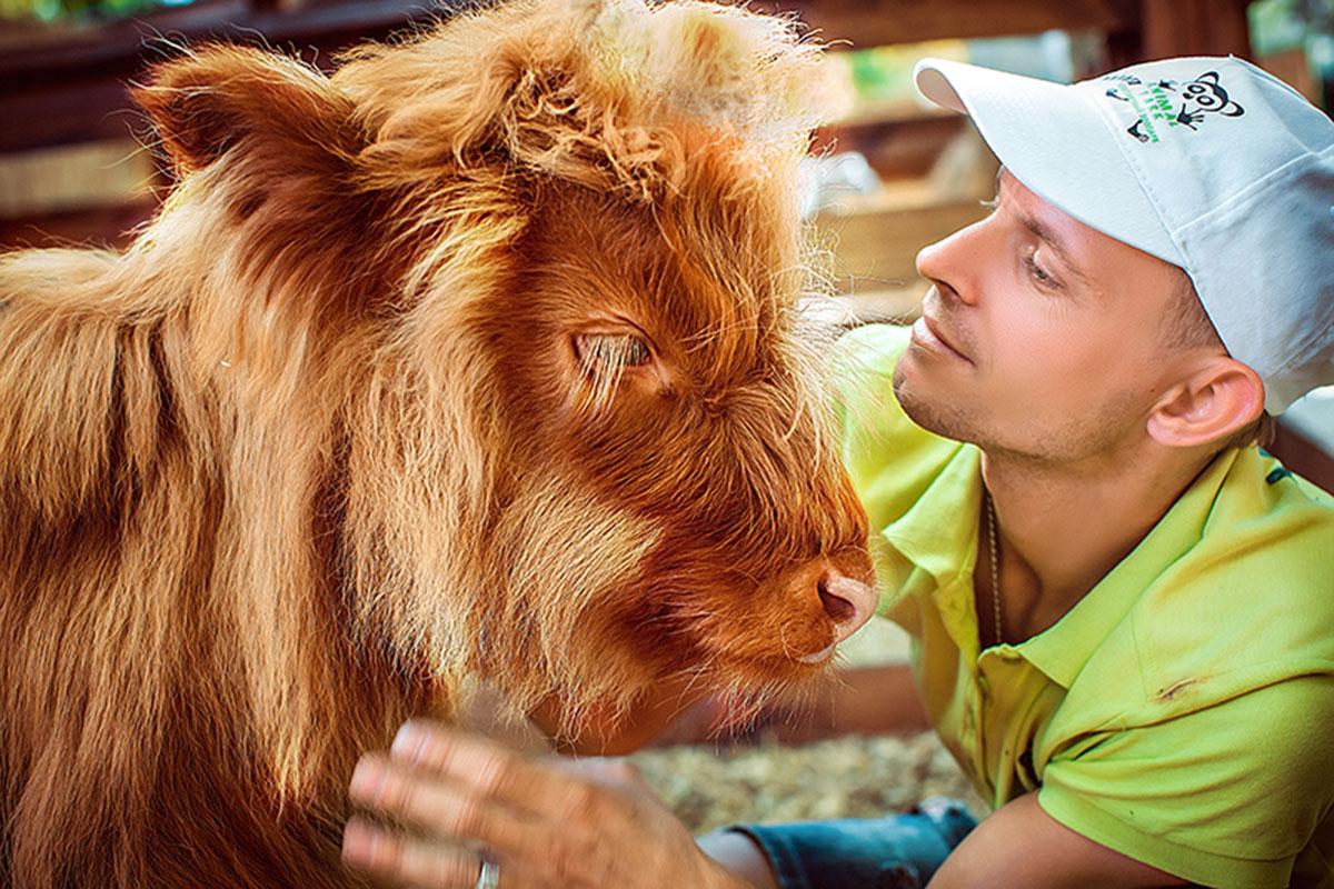 Шотландська худоба (корова) — контактний зоопарк Animal Park