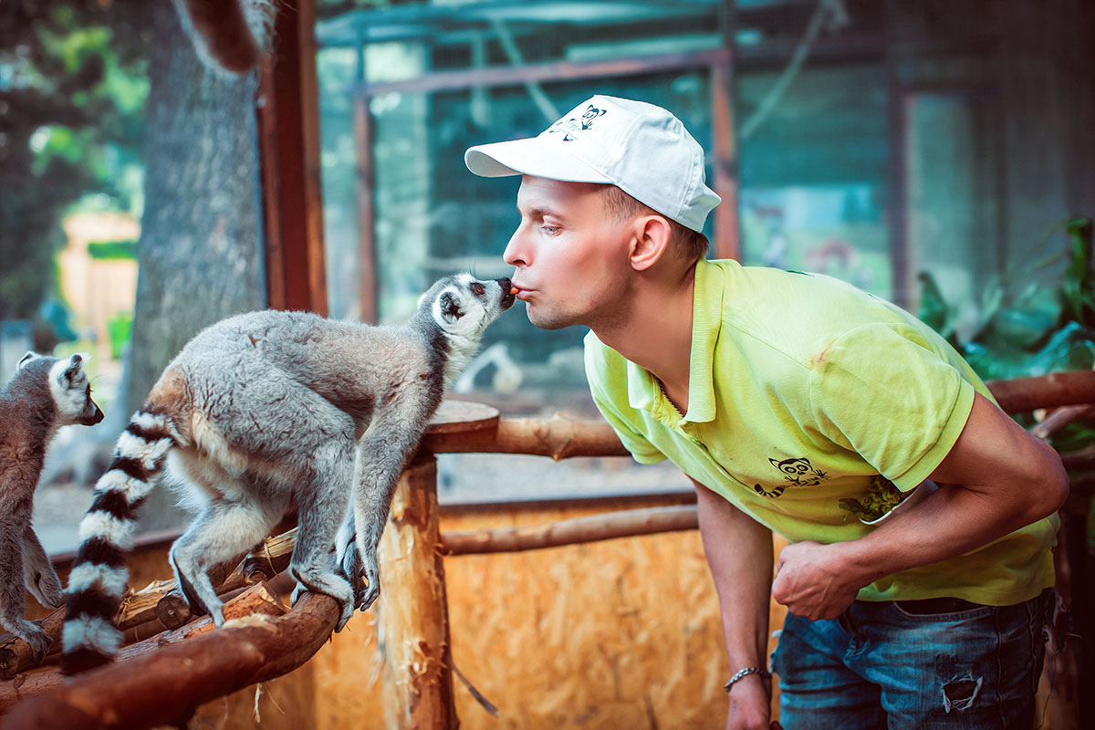 Lemur katta — contact zoo Animal Park