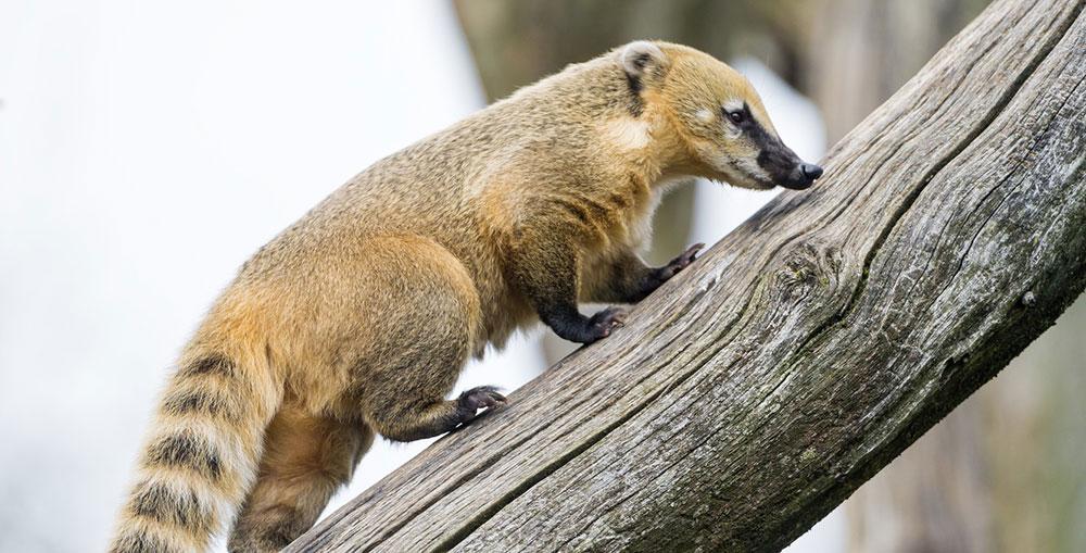 Animal Park – Носуха