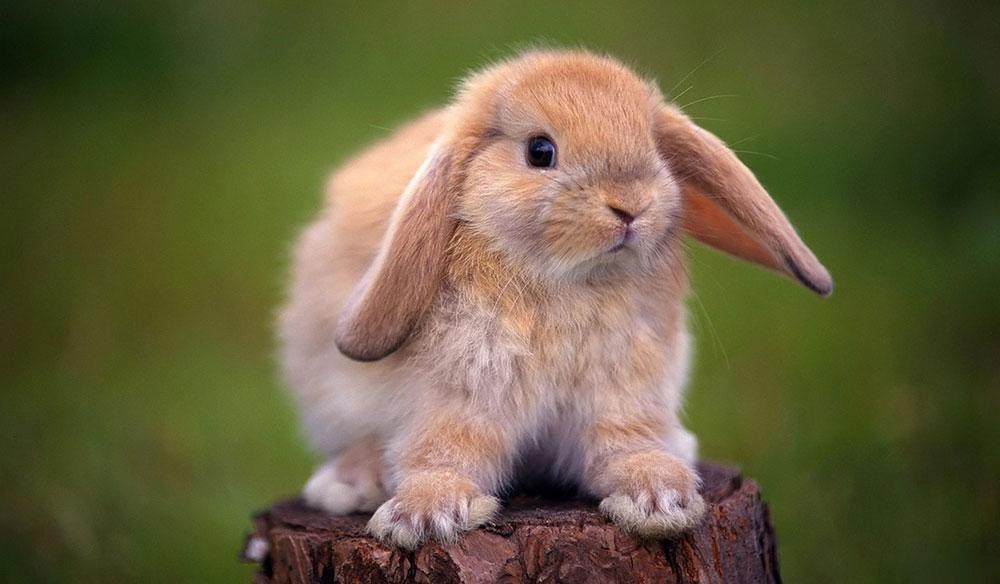 Animal Park – Кролик