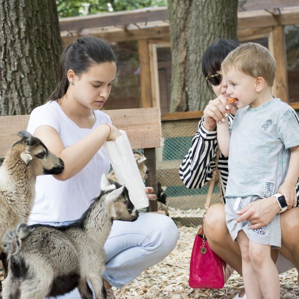 Тварини і зоопарки