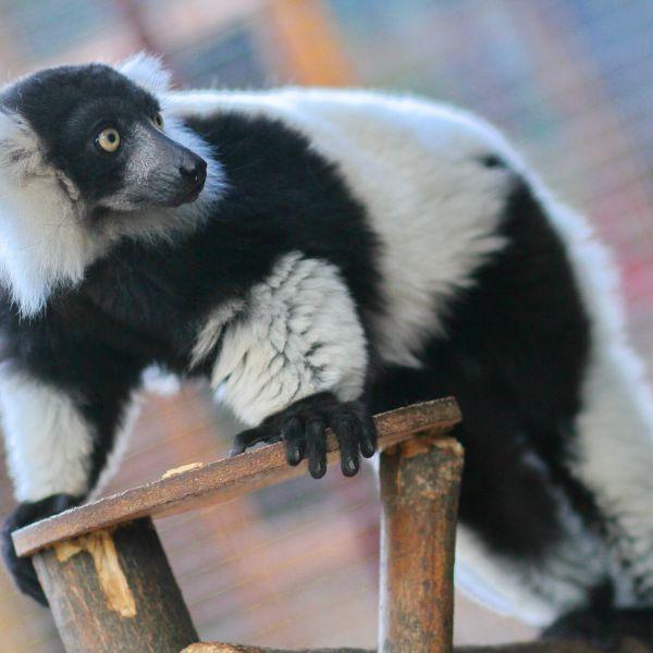 Фотозвіт 05.10.2016 Animal Park контактный зопарк